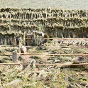 Vie rurale laotiennes