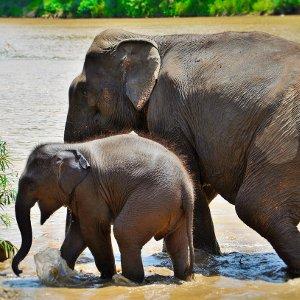 Promenades avec les éléphants - Laos