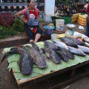 Pêche traditionnelle - Laos