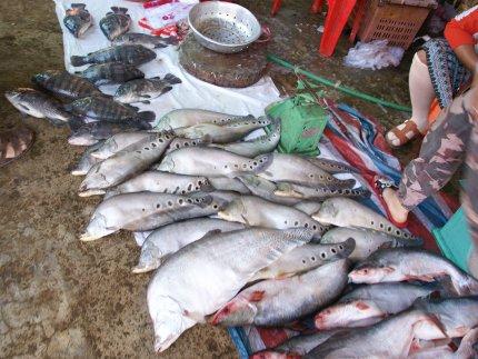 Laos - biodiversité exceptionnelle