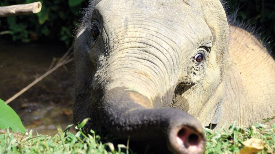 Le Laos, le pays du « million d'éléphants »
