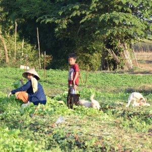 Bolovens, une région agricole majeure - Laos