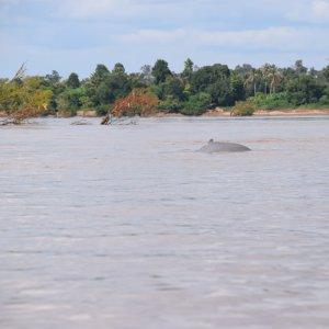 Province de Champassak, les 4000 îles - Laos