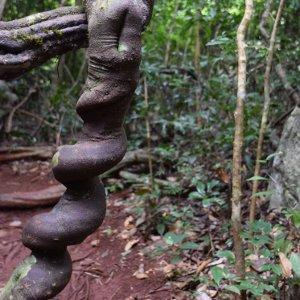 Le Nord-Ouest Laos, l'exubérante nature