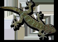 Gecko - Laos autrement