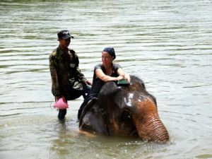 Voyage au Laos, elephants