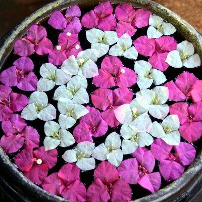 Voyage au Laos, fleurs