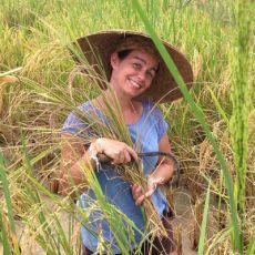 Voyage au Laos, femme dans les rizières